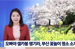 국내 최초의 부산사투리 뉴스 '붓싼뉴스' 화제